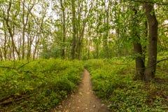Arbres dans la forêt au coucher du soleil, au bois naturel et aux usines, chemin dans l'herbe Image stock