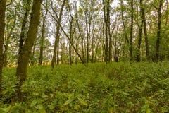 Arbres dans la forêt au coucher du soleil, au bois naturel et aux usines, chemin dans l'herbe Images stock