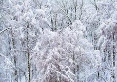 Arbres dans la forêt couverte de neige Photographie stock