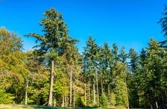 Arbres dans la forêt d'Eltz - Rhénanie-Palatinat, Allemagne photographie stock