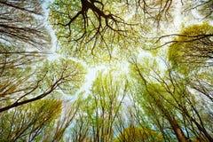 Arbres dans la forêt - lames contre le ciel Photo libre de droits