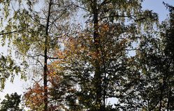 Arbres dans la forêt mélangée dans la lumière de matin photos libres de droits
