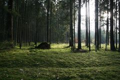Arbres dans la forêt verte image stock