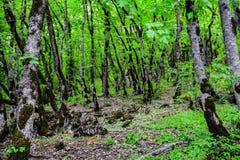 Arbres dans la forêt verte Photo libre de droits