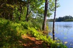 Arbres dans la forêt verte avec de la mousse et des couleurs d'automne Photographie stock