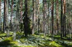 Arbres dans la forêt verte avec de la mousse et des couleurs d'automne Photo stock