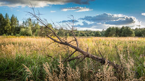 Arbres dans la forêt verte avec de la mousse et des couleurs d'automne Photos stock