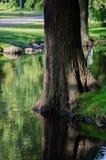 Arbres dans la forêt verte avec de la mousse et des couleurs d'automne Images libres de droits