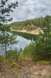 Arbres dans la forêt verte avec de la mousse et des couleurs d'automne Photos libres de droits