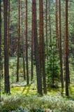 Arbres dans la forêt verte avec de la mousse et des couleurs d'automne Photo libre de droits