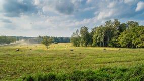 Arbres dans la forêt verte avec de la mousse et des couleurs d'automne Image stock