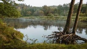 Arbres dans la forêt verte avec de la mousse et des couleurs d'automne Photographie stock libre de droits