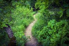 Arbres dans la forêt verte, sentier piéton Photos libres de droits