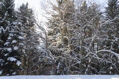 Arbres dans la neige Photos stock