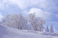 Arbres dans la neige Photographie stock