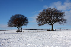 Arbres dans la neige image stock