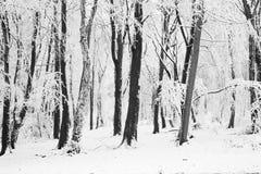 Arbres dans la neige Photos libres de droits