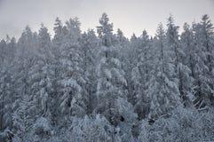 Arbres dans la neige Photo stock