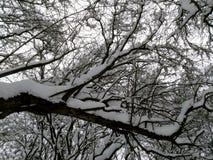 Arbres dans la neige image libre de droits