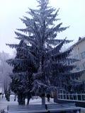 Arbres dans la neige dans la ville Photos libres de droits
