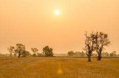 Arbres dans la saison sèche sur le fond de lever de soleil en Thaïlande Images stock