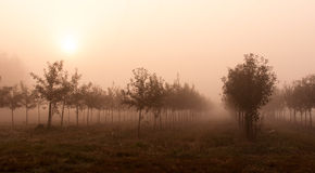 Arbres dans le brouillard Images libres de droits