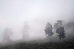 Arbres dans le brouillard Photos stock