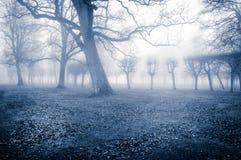 Arbres dans le brouillard Image stock