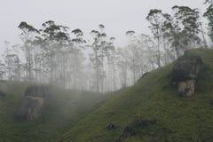 Arbres dans le brouillard Photo libre de droits
