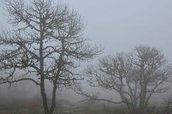 Arbres dans le brouillard Image libre de droits