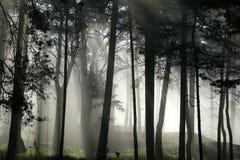 Arbres dans le brouillard photographie stock libre de droits
