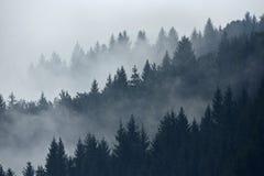 Arbres dans le brouillard pendant le début de la matinée sur la montagne Images libres de droits