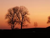 Arbres dans le coucher du soleil Photos libres de droits