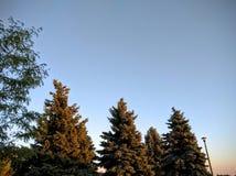 Arbres dans le coucher du soleil image stock