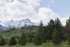 Arbres dans le dessus de montagne de montagnes de wasatch Image libre de droits