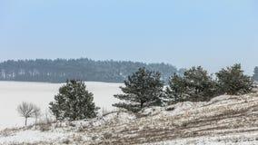 Arbres dans le domaine couvert par la neige Paysage de l'hiver images stock
