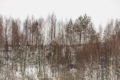 Arbres dans le domaine couvert par la neige Paysage de l'hiver photo libre de droits