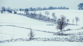 Arbres dans le domaine couvert par la neige Paysage de l'hiver photos libres de droits