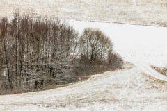 Arbres dans le domaine couvert par la neige Paysage de l'hiver photographie stock libre de droits