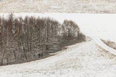 Arbres dans le domaine couvert par la neige Paysage de l'hiver photo stock