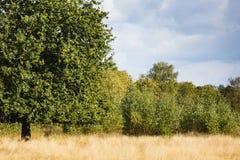 Arbres dans le domaine d'herbe Photo stock