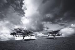 Arbres dans le domaine et les nuages Image stock