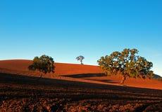 Arbres dans le domaine labouré dans le paysage de pays de vin de Paso Robles Image libre de droits