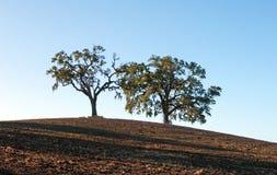 Arbres dans le domaine labouré dans le paysage de pays de vin de Paso Robles Images stock