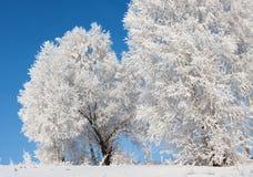 Arbres dans le gel Photo libre de droits