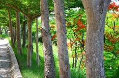 Arbres dans le jardin Photo libre de droits
