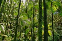 Arbres dans le jardin botanique tropical d'Hawaï Images stock