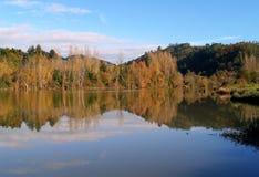 Arbres dans le lac Image libre de droits