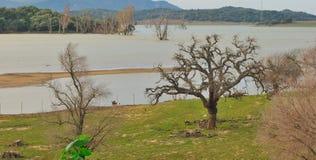 Arbres dans le lac Image stock