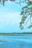 Arbres dans le lac Tissa, Sri Lanka photographie stock